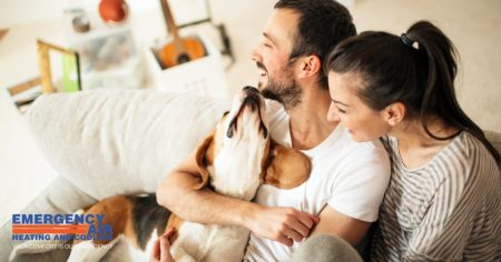 Home Tips Every Pet Lover Should Know